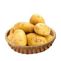 新黄心土豆1.5kg±80g/份
