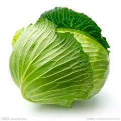 新鲜有机 绿色蔬菜 卷心菜20元/500g大头菜