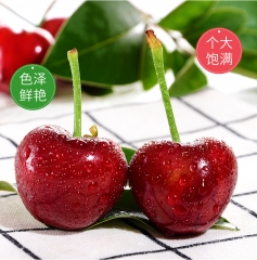 樱桃美早5斤装 大果